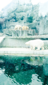 Zoo Budapešt  1